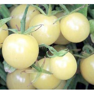 Snow White Cherry 20 seeds