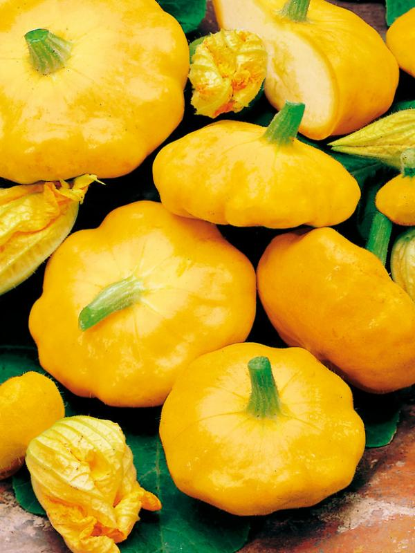 Sunburst Patty pan 10 seeds