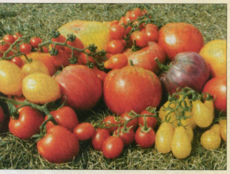 Heirloom tomatoes jandl